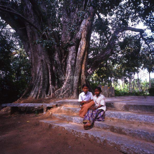 ficus-bangalore_inde_003