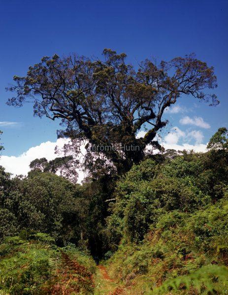 camphrier_mont_kenya