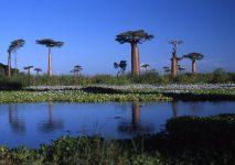 baobabs_allee_madagascar_001