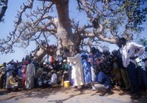 baobab_diass_senegal_001