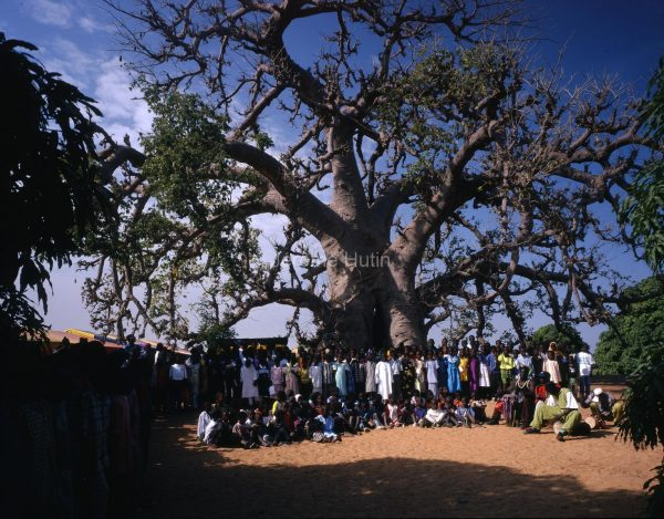 baobab_diass_enfants_senegal_001