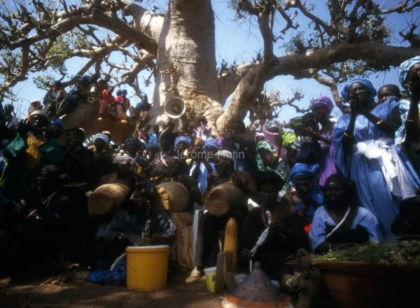 baobab_diass_senegal_002