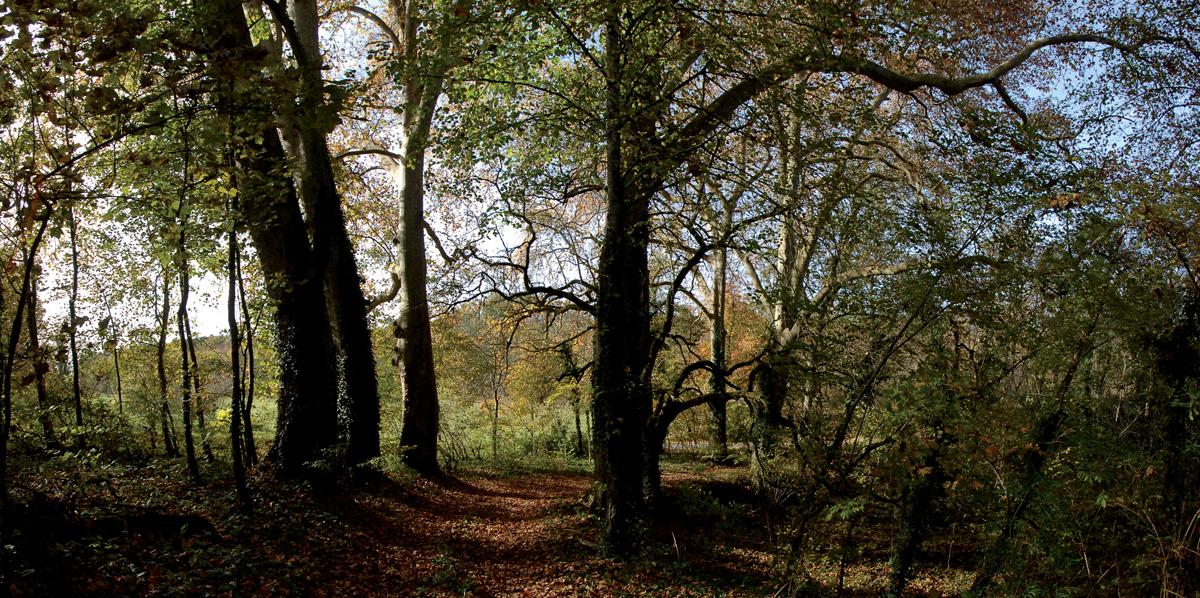 platanes_chateau_du_basty_auriac_perigord_001-2