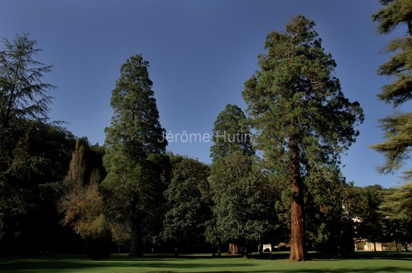 brantome_sequoia_hut_0051-2