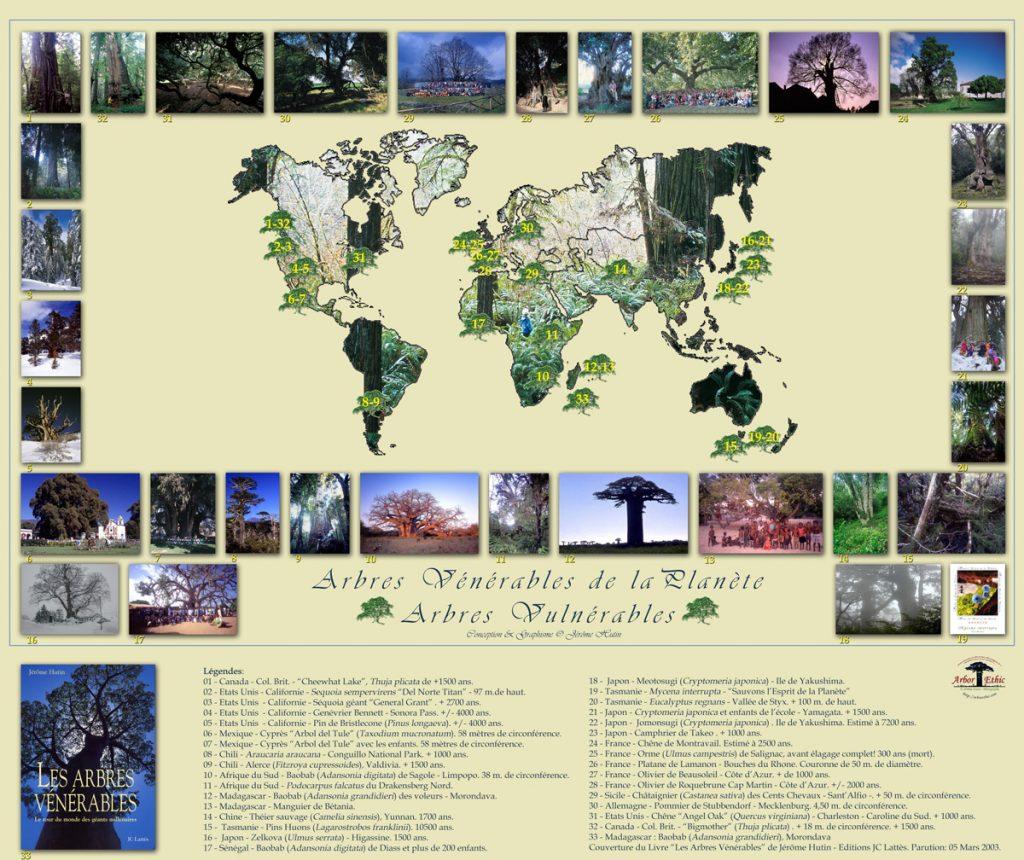 les-arbres-venerables-2