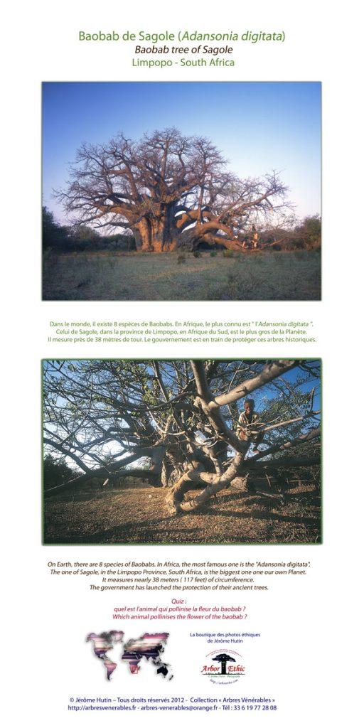 cartes_baobab_sagole_100x200