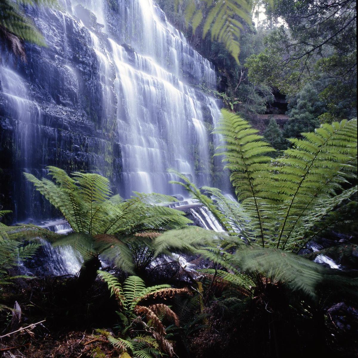 tasmania mountfield