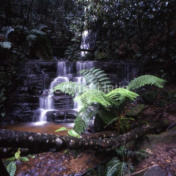 Tasmanie mountfield rainforest