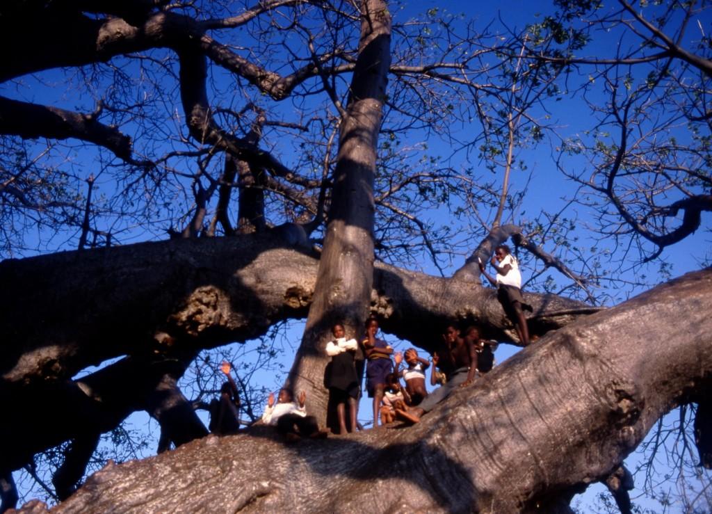 Baobab de Sagole et les enfants, Afrique du Sud