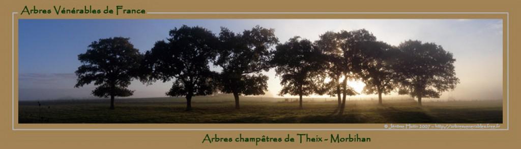 Arbres à Theix, Morbihan