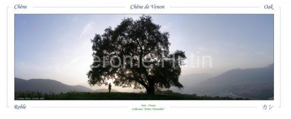 Chene à Venon, Isère