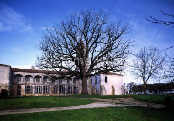 Noyer de Sablonceau, Charentes Martimes