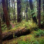 foret_quinault_lake_washington_states_usa