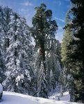 sequoia_general_grant_001