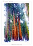 sequoia_national_park_usa_001_a4