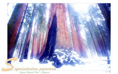 sequoia_national_park_usa_004_a4