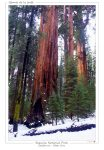 sequoia_national_park_usa_007_a4