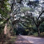 usa_louisiane_live_oaks_001