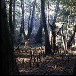 usa_louisiane_cypres_chauve_sauvie_island_swamp_002