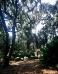 chene_little_st_simons_island_usa