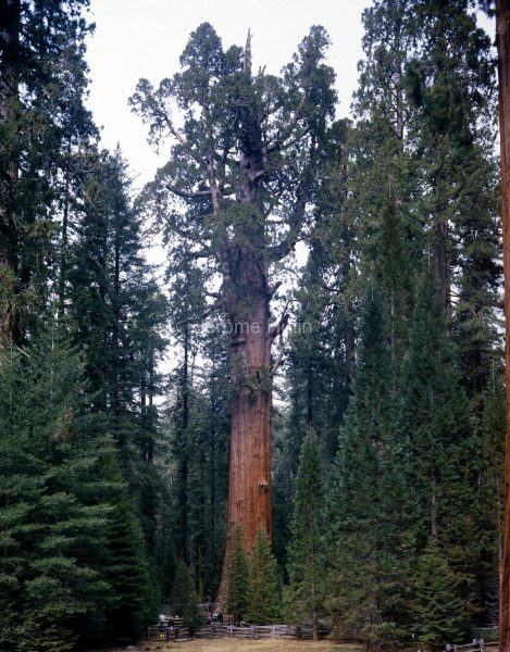 sequoia_general_sherman_usa