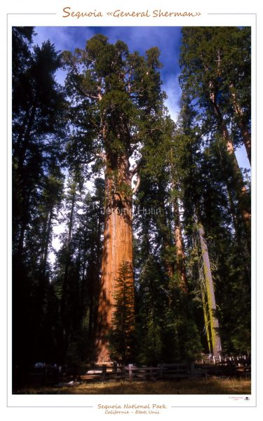 sequoia_general_sherman_usa_005_a4