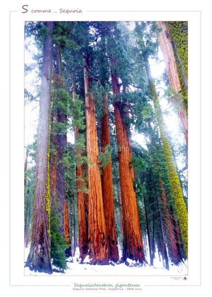 sequoia_national_park_usa_001_a4