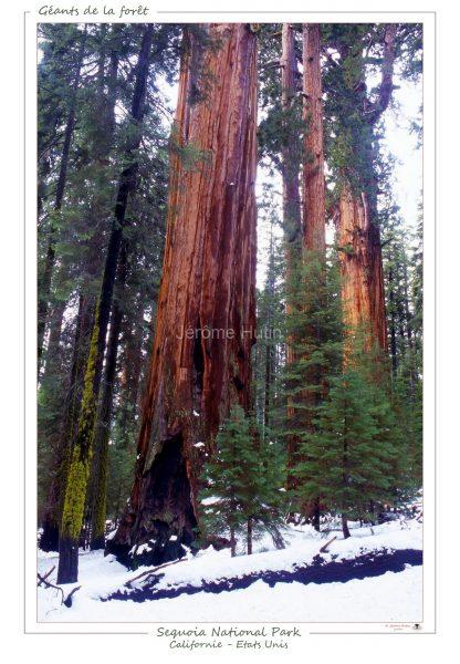 sequoia_national_park_usa_007_a4