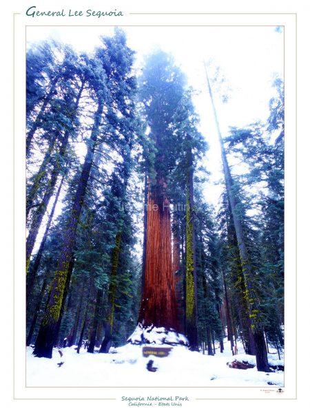 sequoia_national_park_usa_008_a4