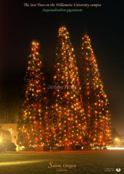 sequoias_geant_salem_oregon_a4