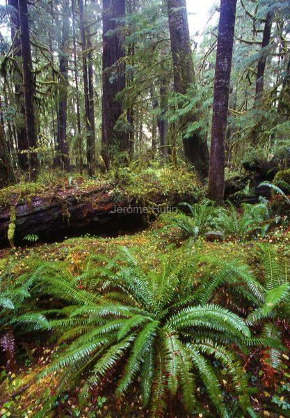 rainforest_washington_state_usa_001