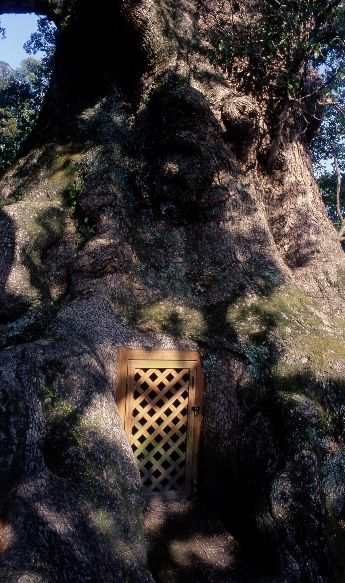 camphrier_kamou_detail_porte_japon