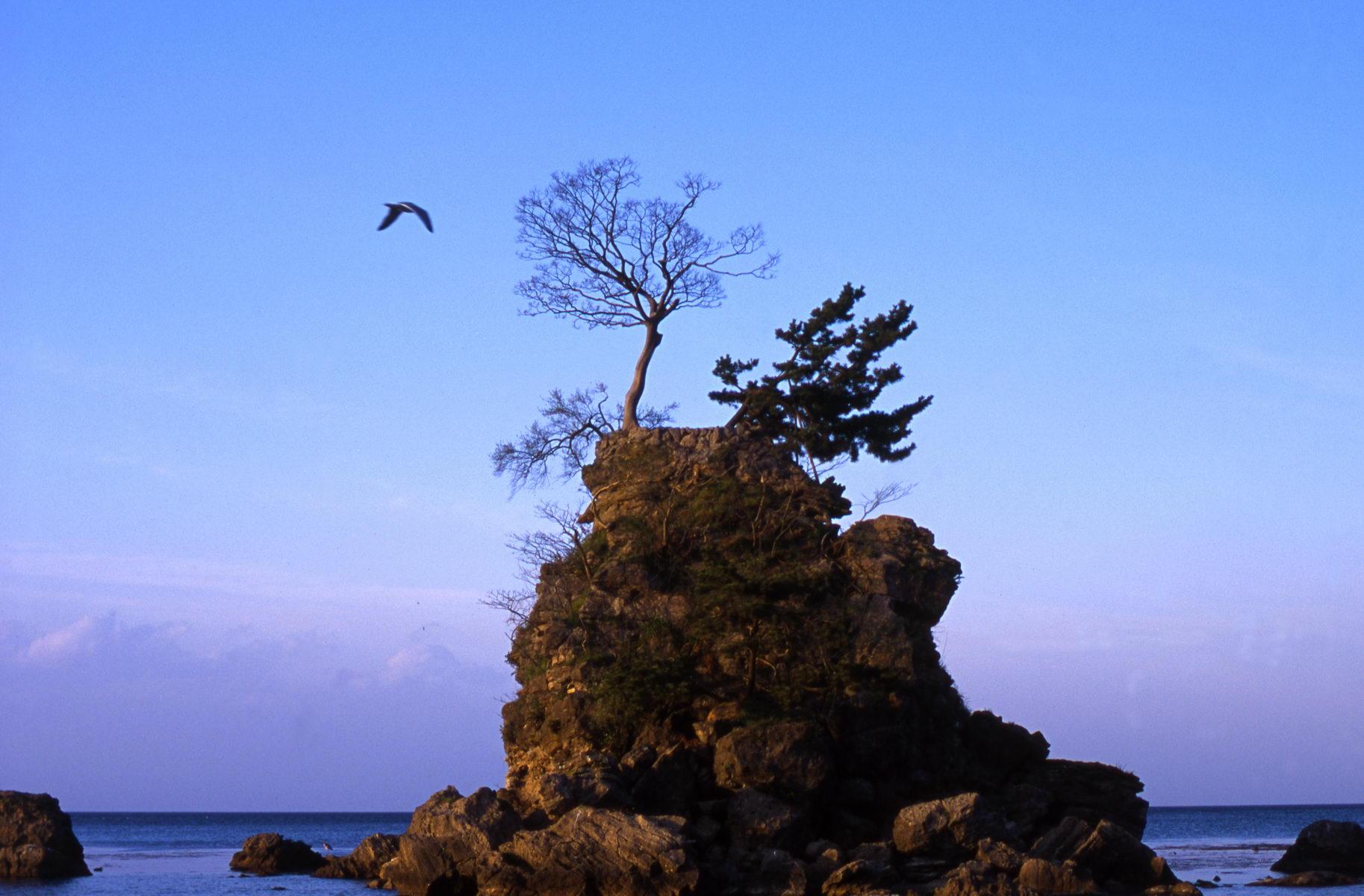 himi_arbre_ascete_japon_003