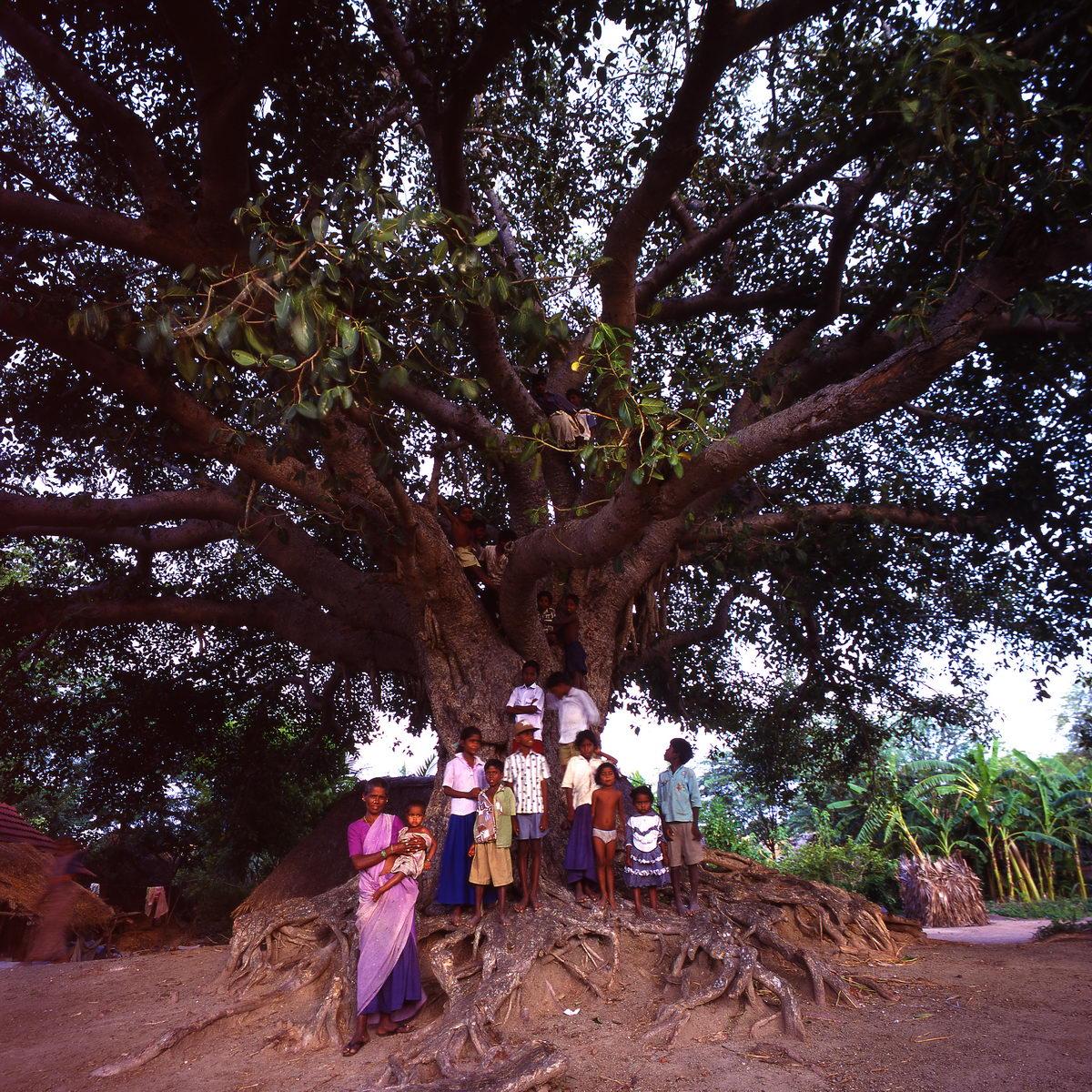 ficus_enfants_weelajabad_tamil_nadu_inde_002