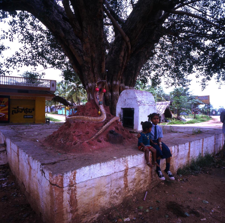 arbre_sacre_enfants_mysore_bangalore_inde