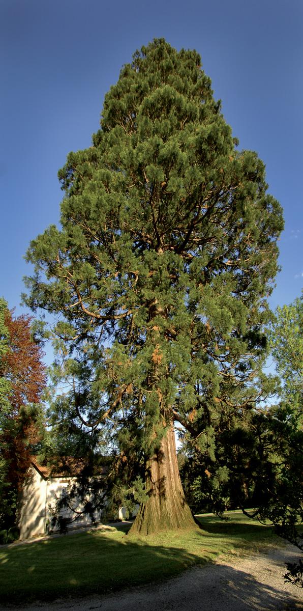 chancelade_sequoia_hut_0113