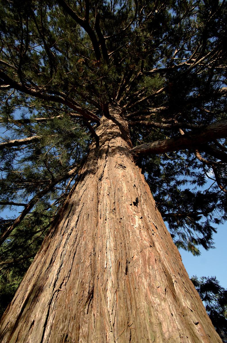 chancelade_sequoia_hut_0116