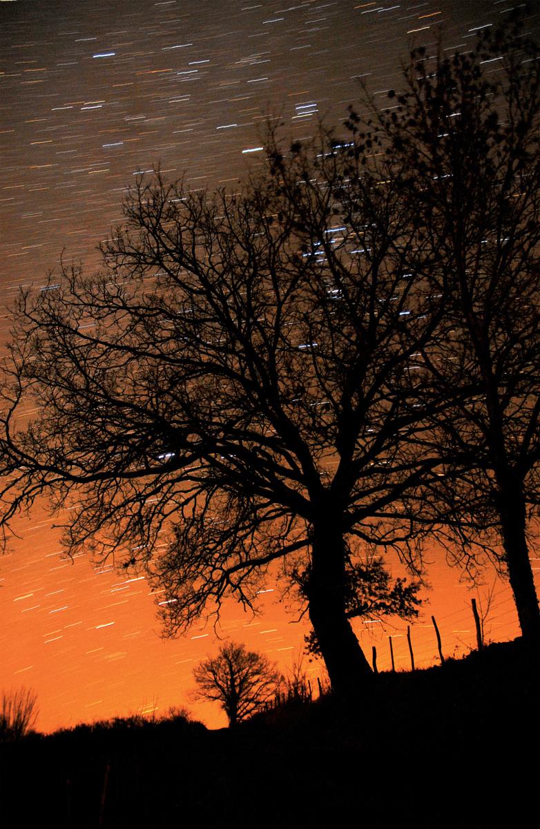 chene-lumineux-sous-les-etoiles-jaf-terrasson-dordogne