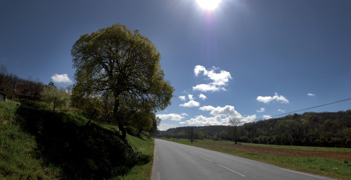 erable_route_montignac_sarlat