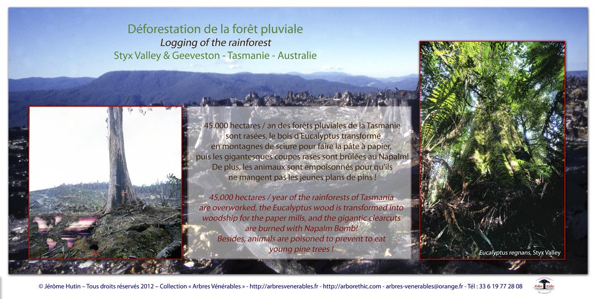 cartes_styx_valley_tasmanie_100x200