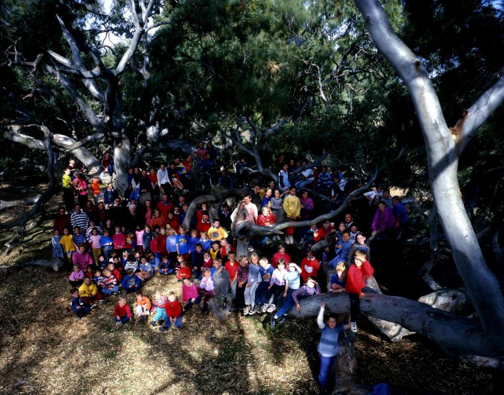 Eucalyptus de Dunkeld et enfants, Australie