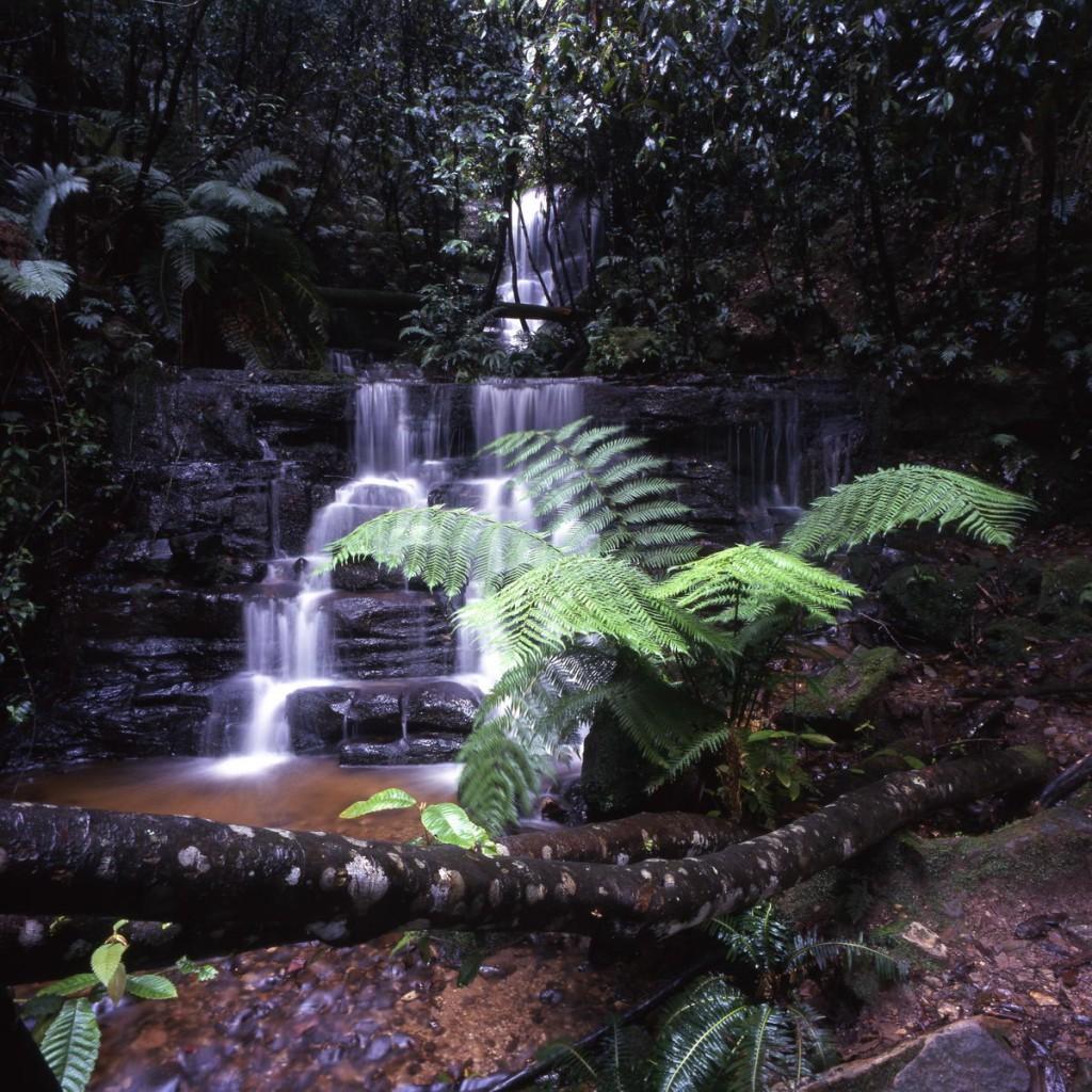 Tasmanie mountfield rainforest