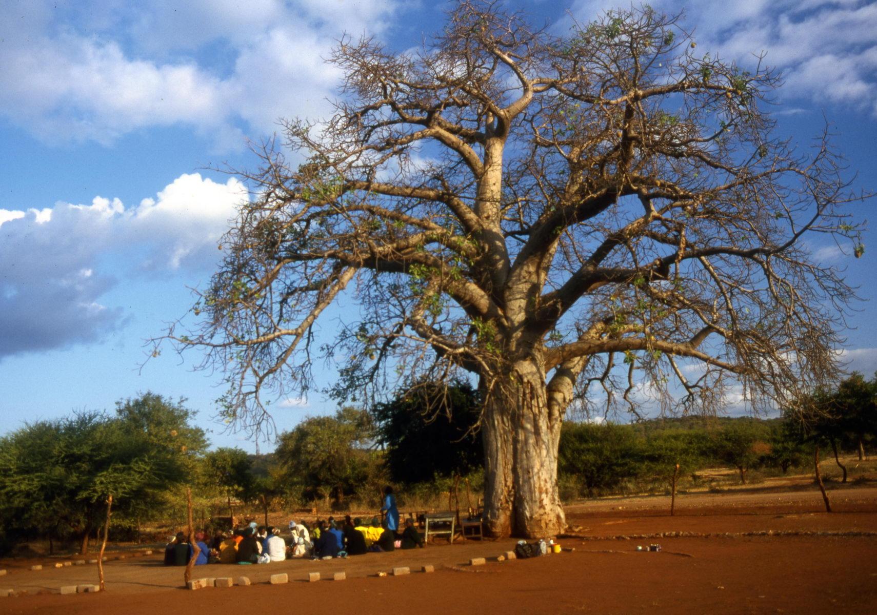 palabre sous le baobab, Afrique du Sud