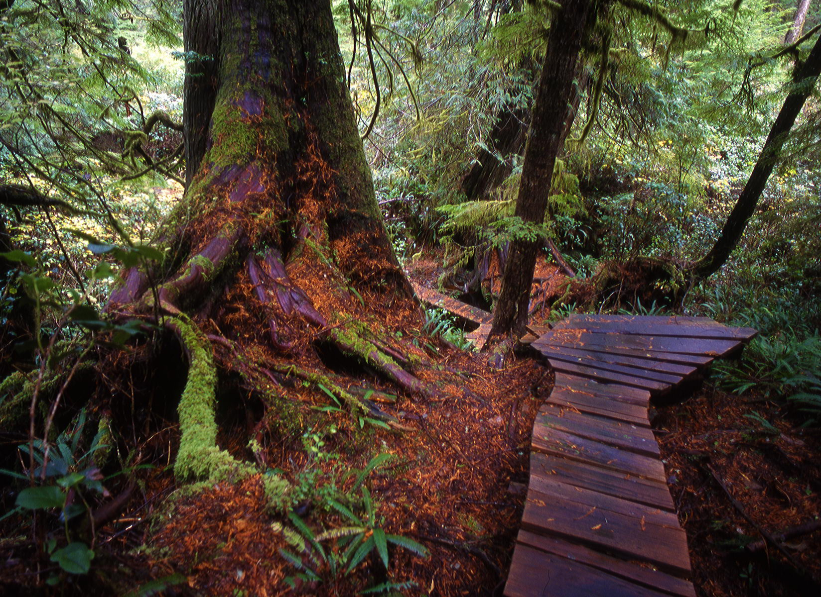 meares_island_bc_001